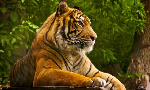 Bandhavgarh Tourist and Resorts Guide