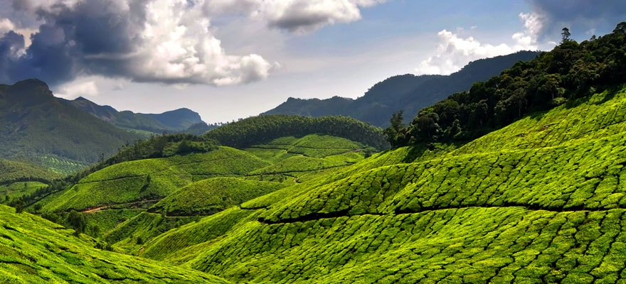 Munnar Tourist Destination