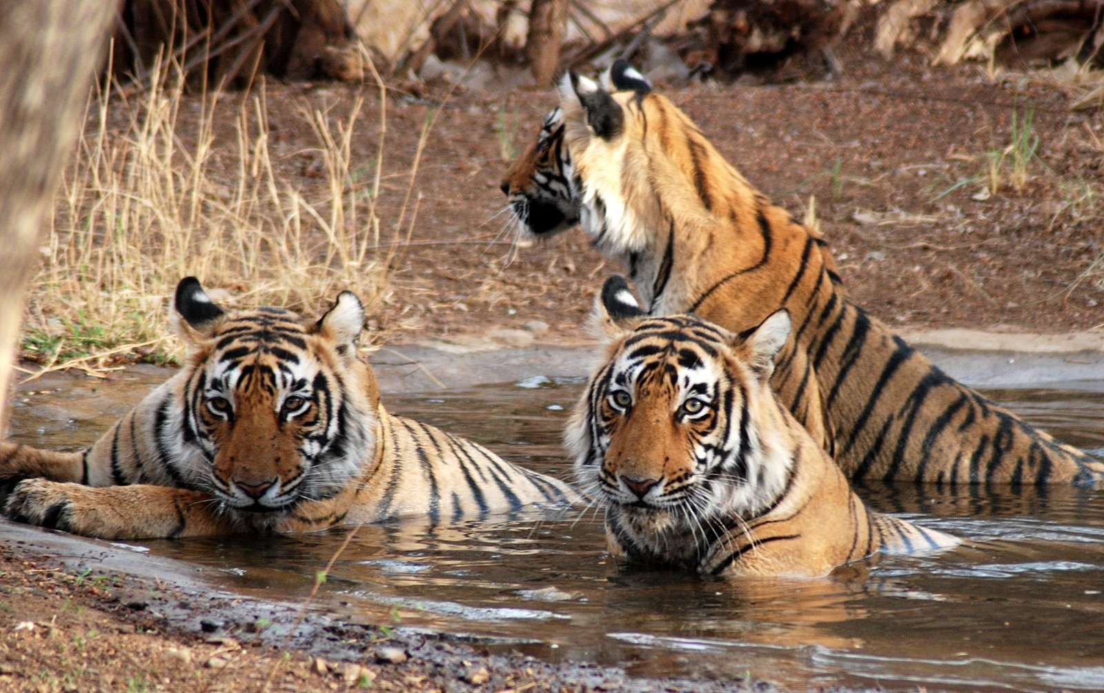 Top 12 Virgin Forests &  Wildlife Parks of India