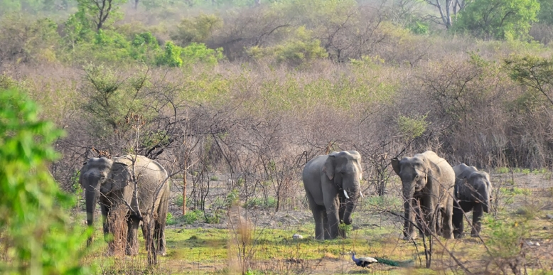 India Top 25 Wild Life Sanctuaries
