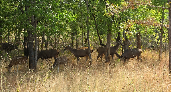 Panna National Park Tourist Guide and Tour package