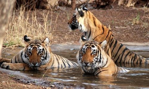 Gir National Park Tour Guide