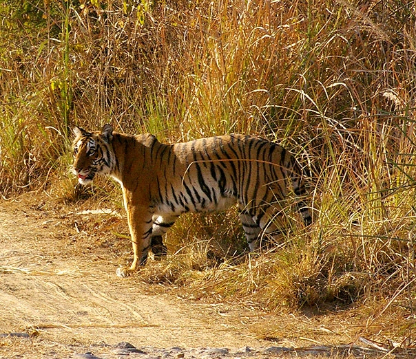 Jim Corbett National Park - One of the Finest National Parks - India