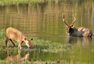 Satpura National Park Tourist Guide