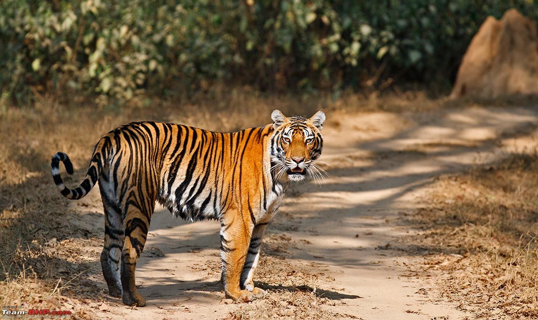 Kanha National Park Safari Tourist Guide 2016
