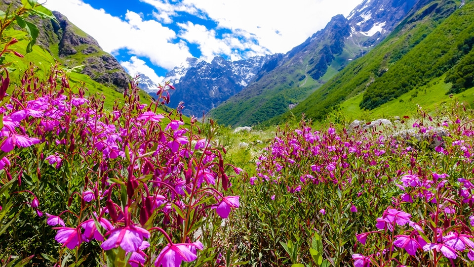 Valley of Flowers India Tourist Guide