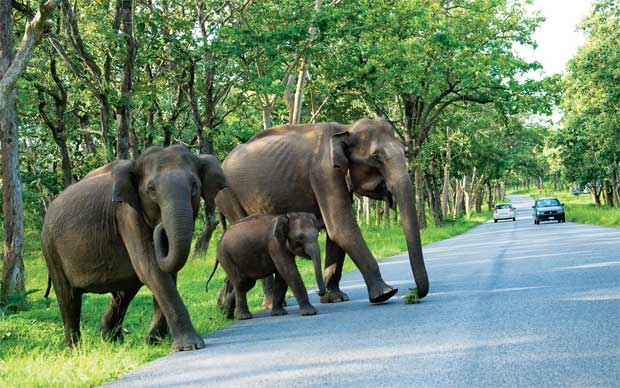 Bandipur National Park – Prominent Tiger Reserve of South India