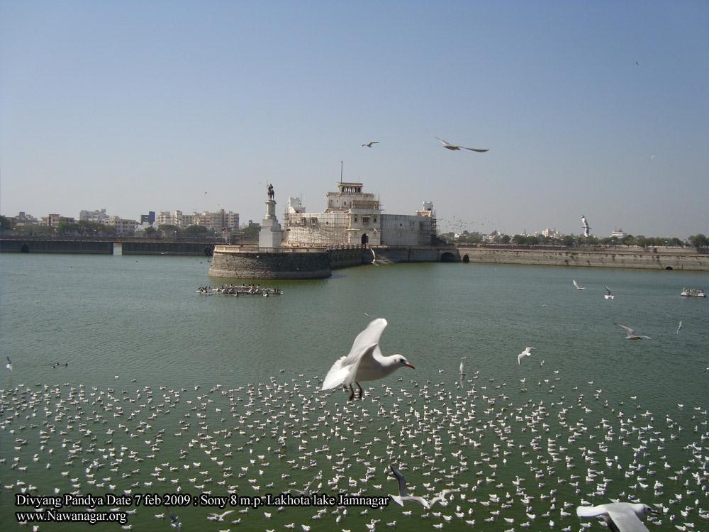 Gujrat Marine Adventure Package – Dwarka – Jamnagar – Narara - Khijadiya Bird Sanctuary