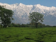 Palampur Tourism Holidays - A colonial architecture temple & Bir billing - Paragliding capital of India