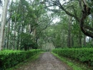 Bangalore, Coorg and Wayanad Tour Package