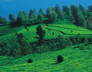 Bangalore Mysore Coorg Wayanad Ooty Tour Package from Mumbai