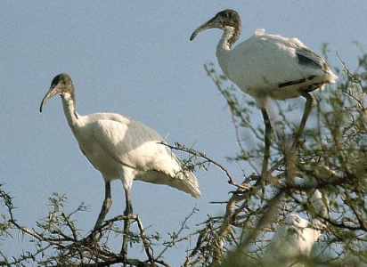 ranthambore national park Package with Keoladeo Bharatpur Bird Santuary