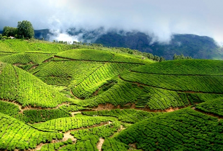 Munnar local siteseeing Tour