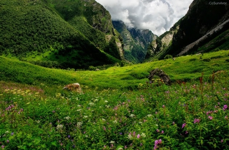 Valley of Flowers Trek with Hemkund Sahib Tour