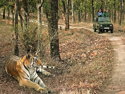 Explore Mythical Jungles with kamasutra capital of world - Tiger Safari in Panna & bandhavgarh with Khajuraho