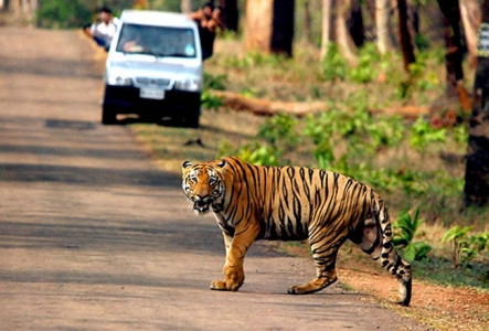 Royal Bengal Tiger Tour Package