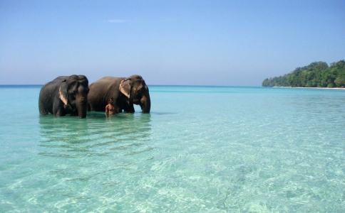 Andaman Luxury Holidays Package -Havelock Stay and Day Trip to Neil Island
