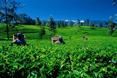 SriLanka Tour Package from Kerala