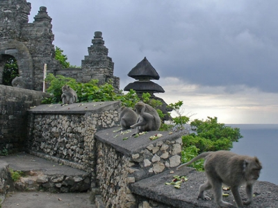 Monkey Temple Tour Package Uluwatu