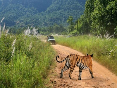 Bandhavgarh Tiger Trails Tour Package from Kolkata Delhi Jabalpur