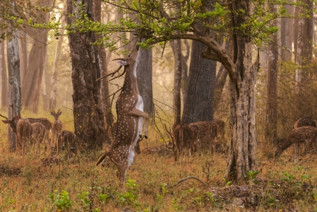 Bangalore Nagarhole Weekend Trip - World's most magnificent creatures in Nagarhole India