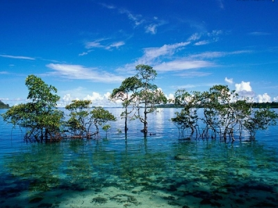 Havelock Island Holiday Honeymoon Packages
