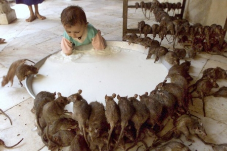 Karni Mata Rat Temple Bikaner Tour Package