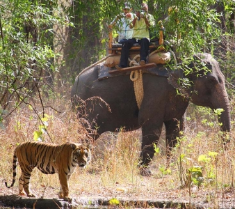 Ultimate Bandhavgarh with Khajuraho