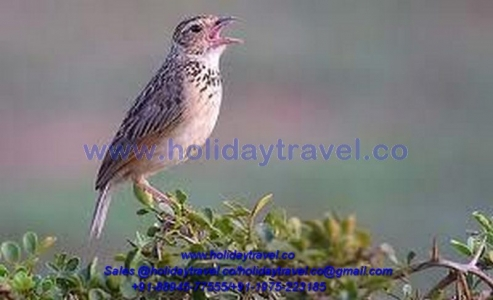 Himalayan Birds watching Tour