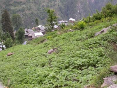 Malana Village Trek Package with Chanderkhani pass