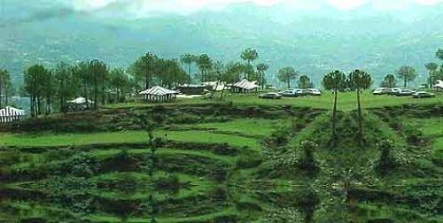 Kasauli Barog Shogi Shimla Tour package