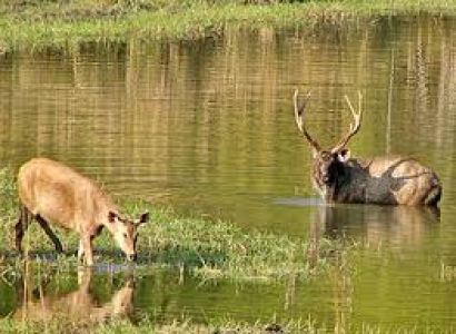 Kanha National Park Tour with  Bandhavgarh National Park-  Holidays in Most Famous Wildlife parks  in india