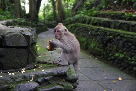 Monkey Forest Bali Tour package