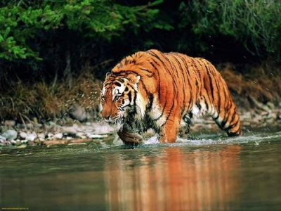 Tiger Trail with Kamasutra - Tour of India - Best National Parks - Pench National Park - Kanha Kisli - Bandhavgarh National Park & Khajuraho