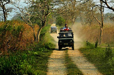 Kaziranga National Park Tour Package – Asia's Last Place for One Horned Rhino - A UNESCO World Heritage Site Wildlife Sanctuary