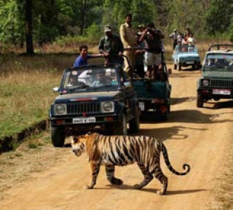 Jungle Adventure  - Jungle Resorts - Central India - Bandhavgarh - Kanha Kisli - Panna National parks