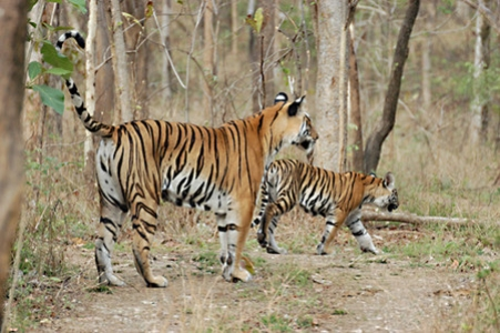 Call of the Jungle Chhattisgarh Package Tour