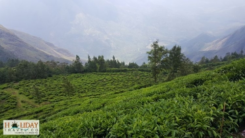 Munnar Holiday Honeymoon Package with AthiraPilley and Kolukkumalai