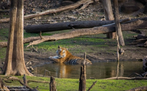 Pench National Park Weekend Package