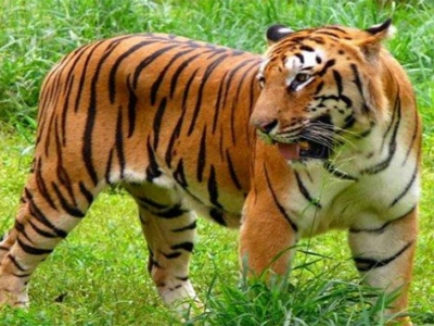 Chikhaldara Wildlife Tour Package