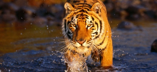Jim Corbett National Park Tiger Safari  Package with Mussoorie Nainital