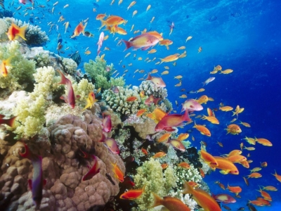 Lakshdweep Coral Reef Tour Package from Kerala