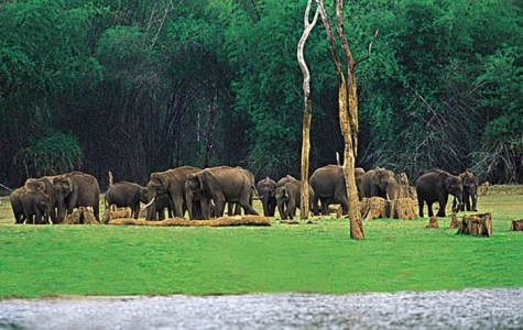 The Romantic Exotic Wayanad - Hills Jungles Wild Life