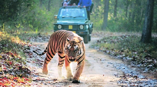 Best of India Tiger Tour