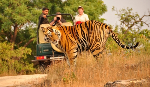 Tiger Photographic Tour Package