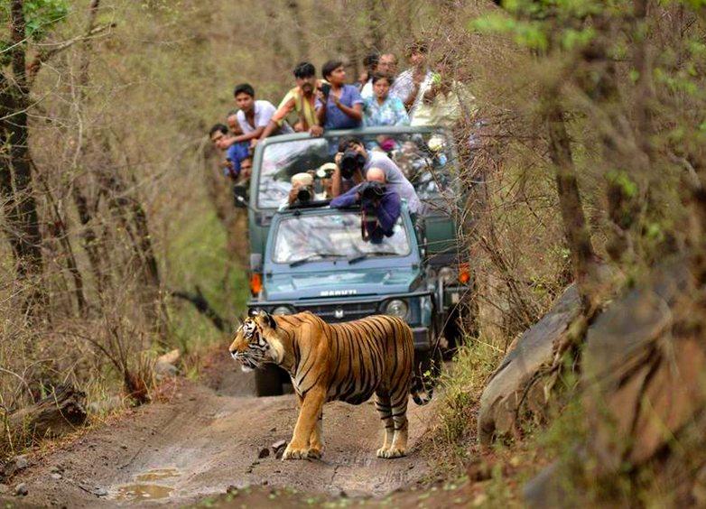 Kanha Bandhavgarh Wild life Tiger Safari Tours
