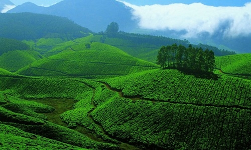 Munnar Tourist Guide Site Seeing & Holiday Packages