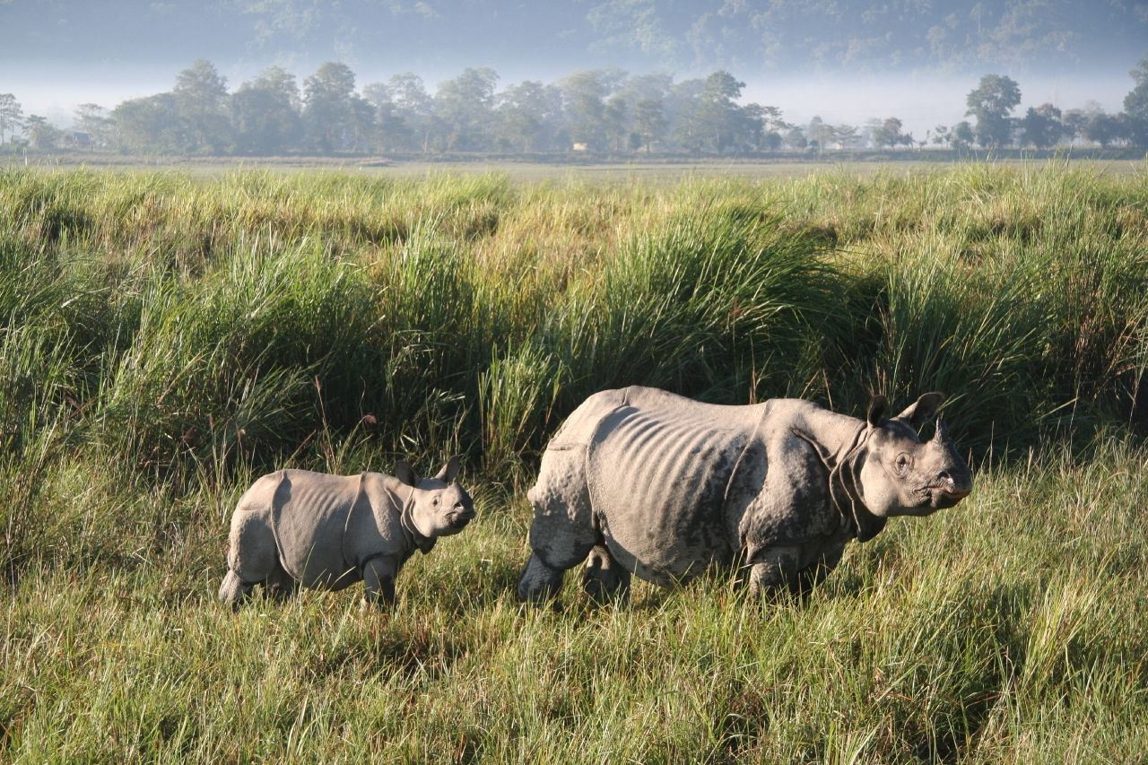 Kaziranga National Park Tourist Guide – Home of world's Great One-horned Rhinoceros
