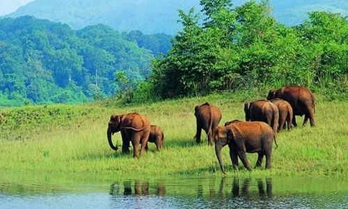 Periyar WildLife National Park
