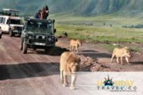 Wildlife and Jungle Holidays